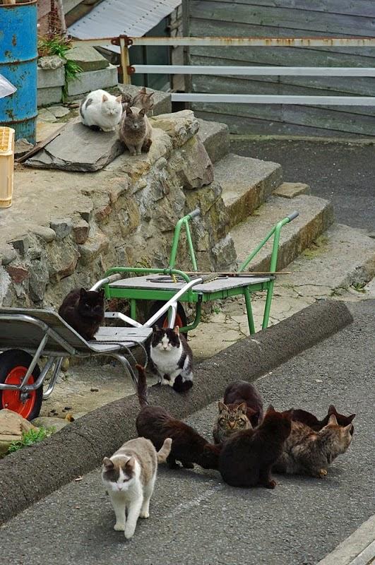 Tashirojima Pulau Kucing Di Jepang Sukajepang Com