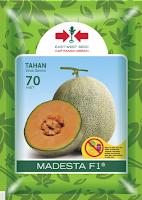 melon madesta,melon,benih melon,bibit melon,buah melon,budidaya melon,cap panah merah