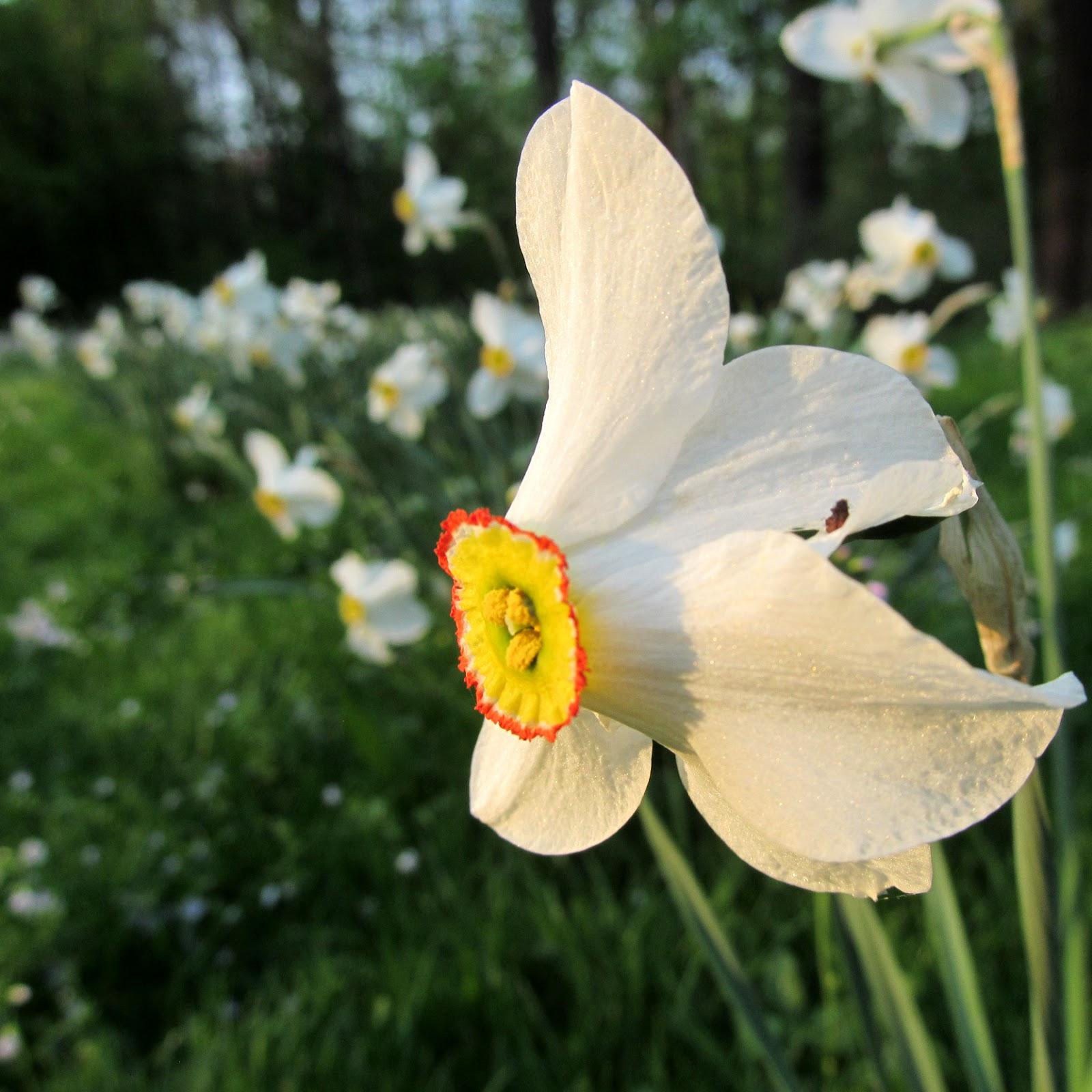 Draussen: Frühling