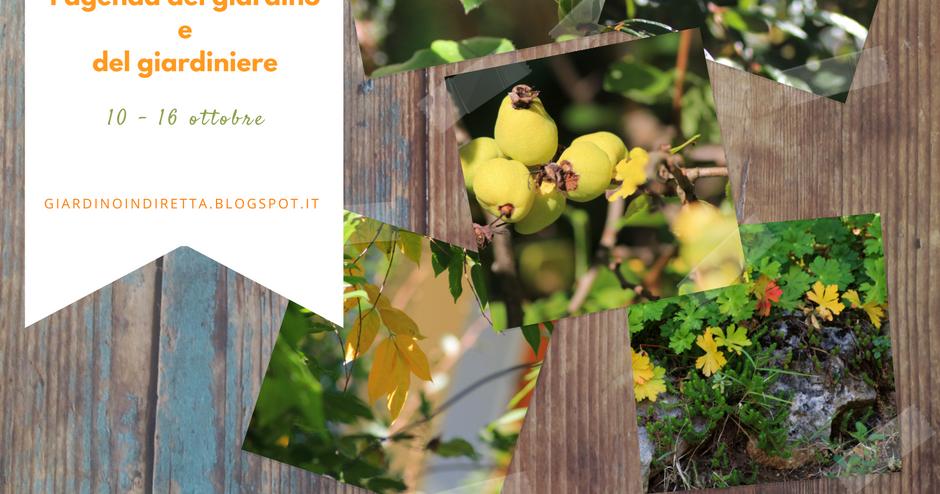 l'agenda del giardino e del giardiniere (10 - 16 ottobre)