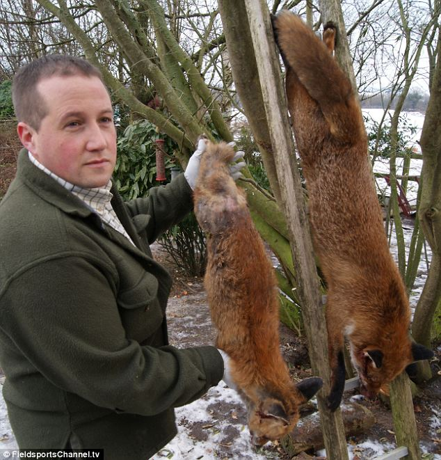 The animal zone: 'How I killed the biggest fox in Britain ...