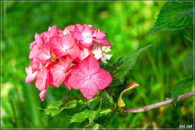ảnh hoa đẹp