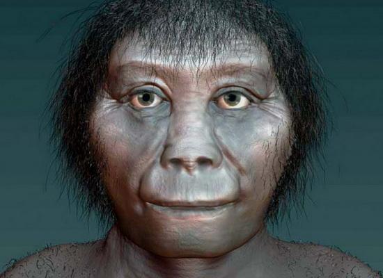 Laporan Penelitian Homo floresiensis Berevolusi dari Homo habilis, Bukan Homo erectus