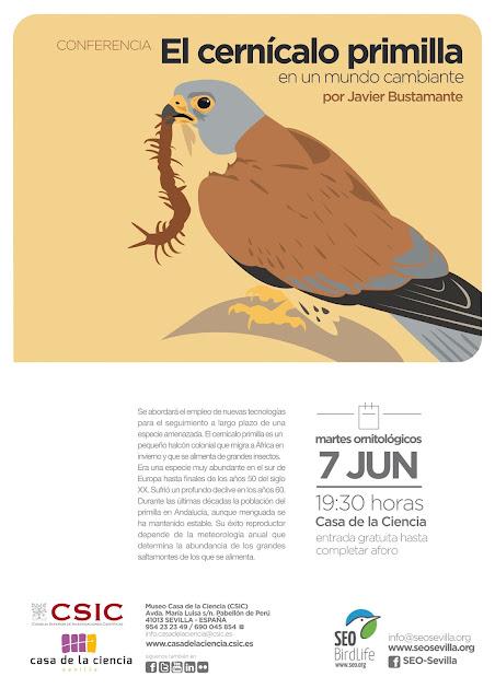 Conferencia: El cernícalo primilla en un mundo cambiante. Por Javier Bustamante, 7 de Junio 2016. Grupo Local SEO-Sevilla.