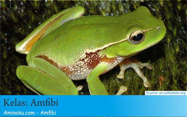 Fakta unik amfibi