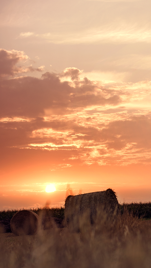 summer 640x1136  HD Mobile Wallpapers For Your Smart Phone