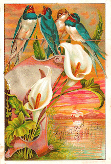 bird flower advertisement image vintage