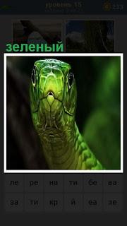 зеленый змей показывает свою голову с круглыми глазами