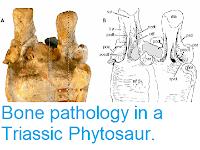 https://sciencythoughts.blogspot.com/2014/01/bone-pathology-in-triassic-phytosaur.html