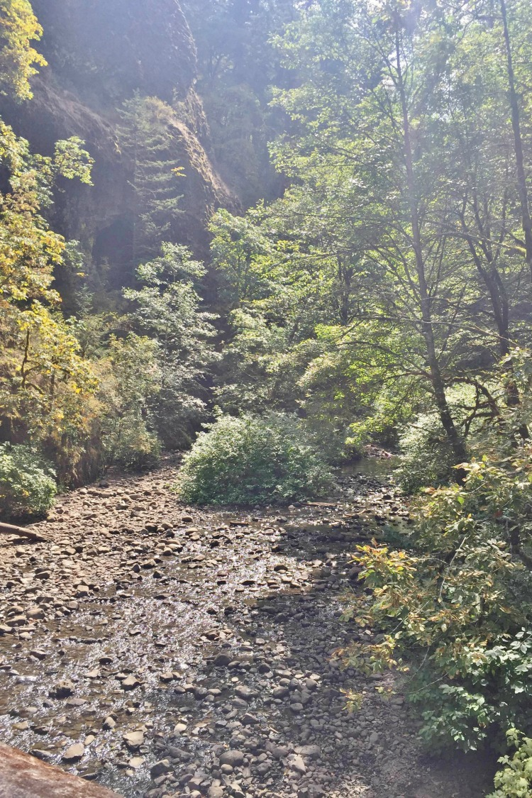 Looking for a fun Pacific Northwest Hike?  Check out Oneonta Gorge!