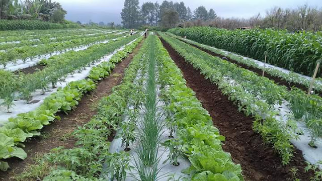 The positive effect of intercropping