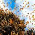 Tour Mariposa Monarca la gran experiencia! 17 Marzo