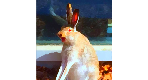 Campus Rabbit