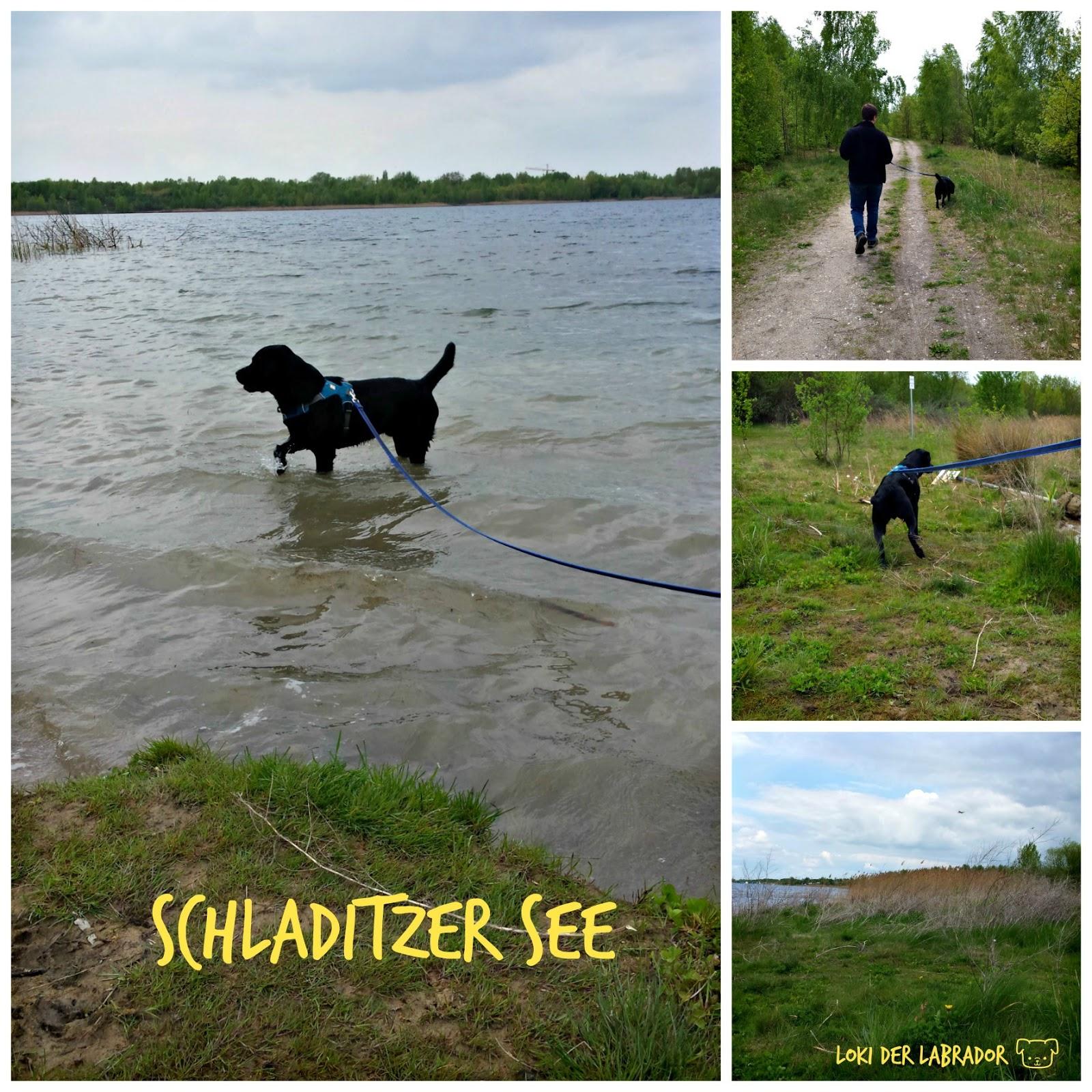 Schladitzer See Labrador Schwarz