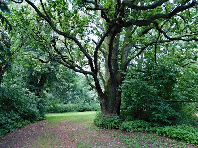 gościeszyn, park, pałac, otoczenie, zieleń, dendrologia, drzewa, dąb