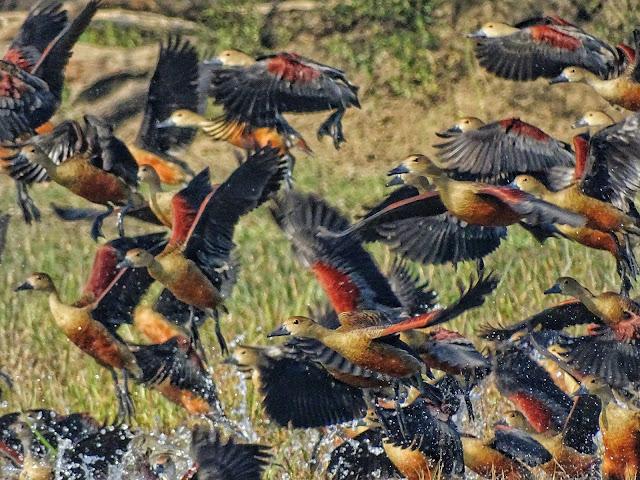 Birds of Keoladeo National Park