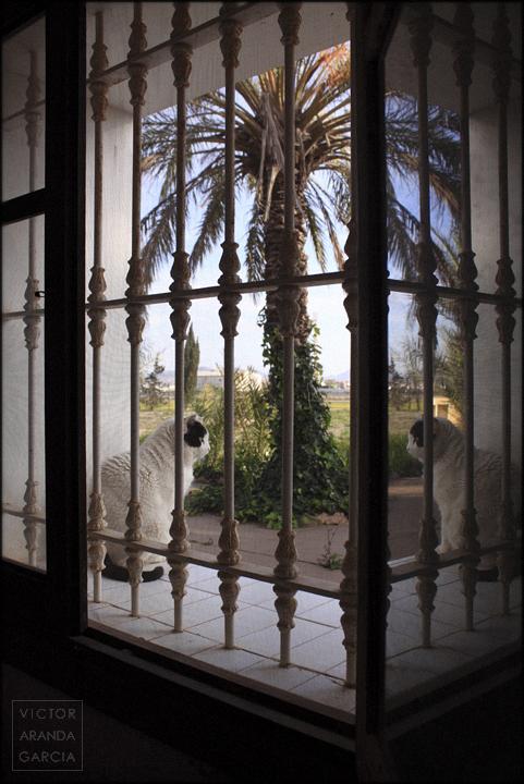fotografía,gato,fuente_alamo,ventana,limites,reflejo