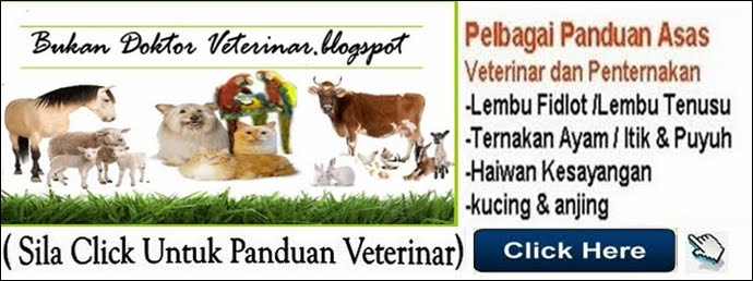 Blog Veterinar