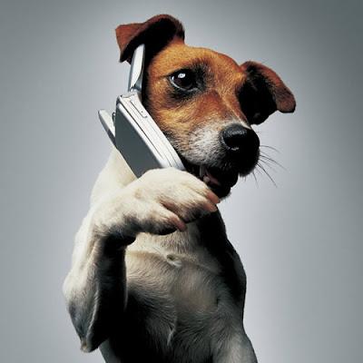 perro hablando por telefono