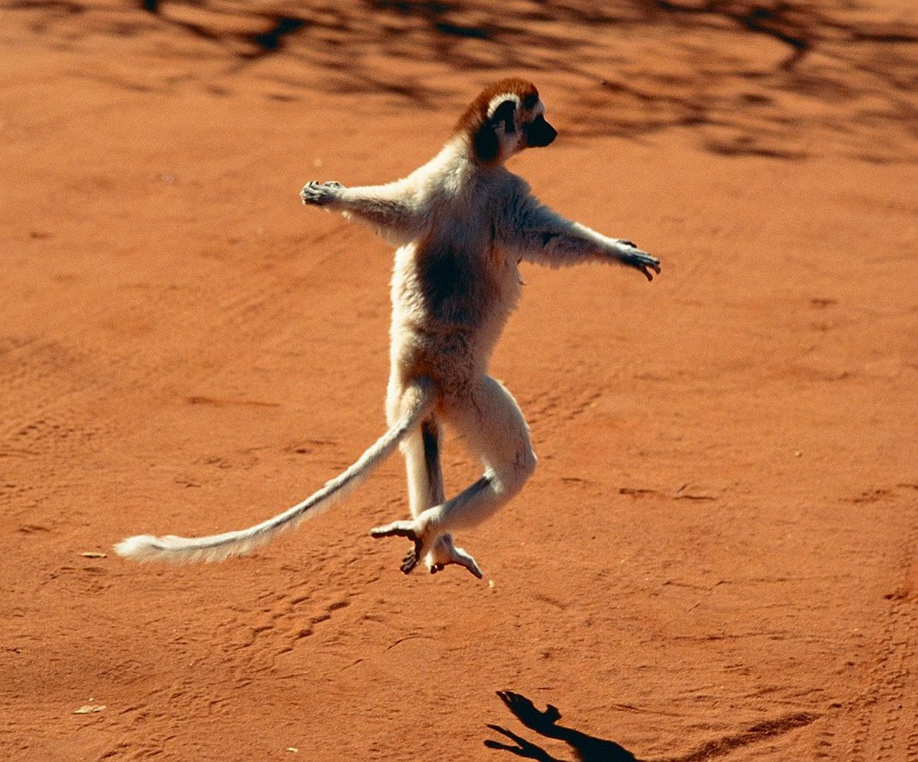 весенние танцы животных картинки удовольствием любовались боярским