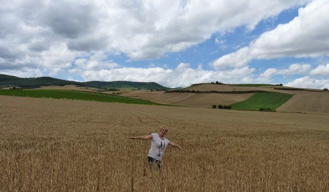 Campos de cereales de La Rioja.