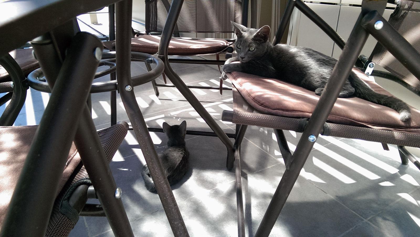 Gatos, Yecla, agosto 2016