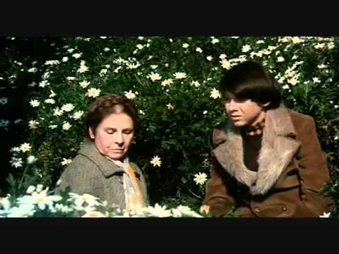 Harold and maude dating survey scene