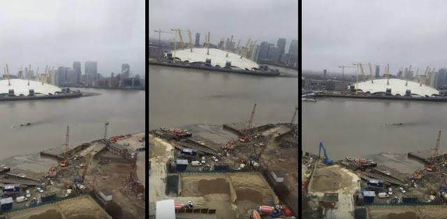 Mysterious creature filmed in the river Thames in London, UK  Mysterious%2Bcreature%2BThames%2BLondon