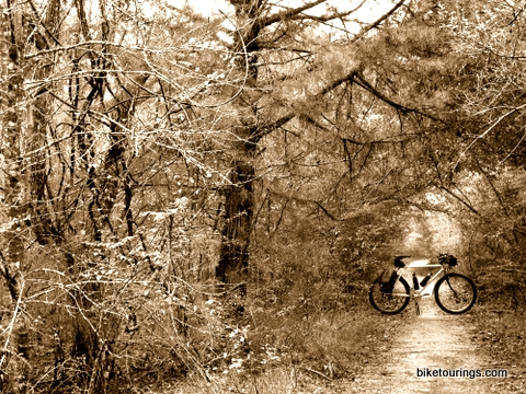 Picture of mountain bike and trail side foliage