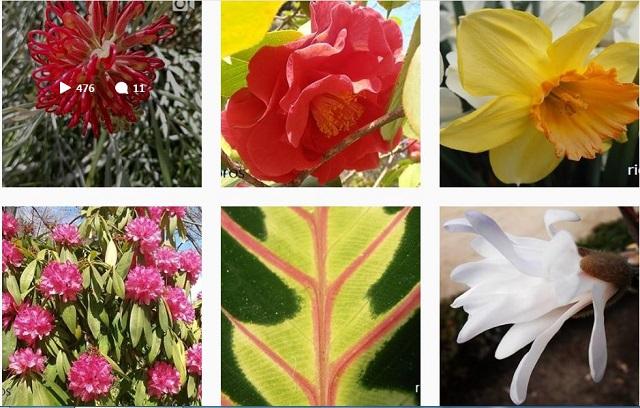 Plantas en Vero, Facebook y Twitter