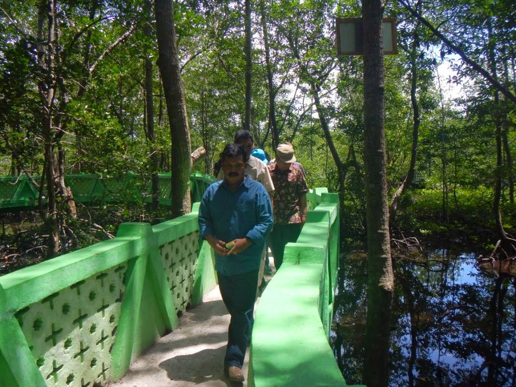 Hutan Mangrove Langsa Dijadikan Wisata dan Pendidikan