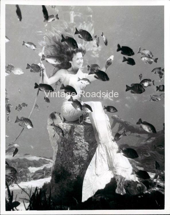 Mermaid Pictures Aquarena Springs