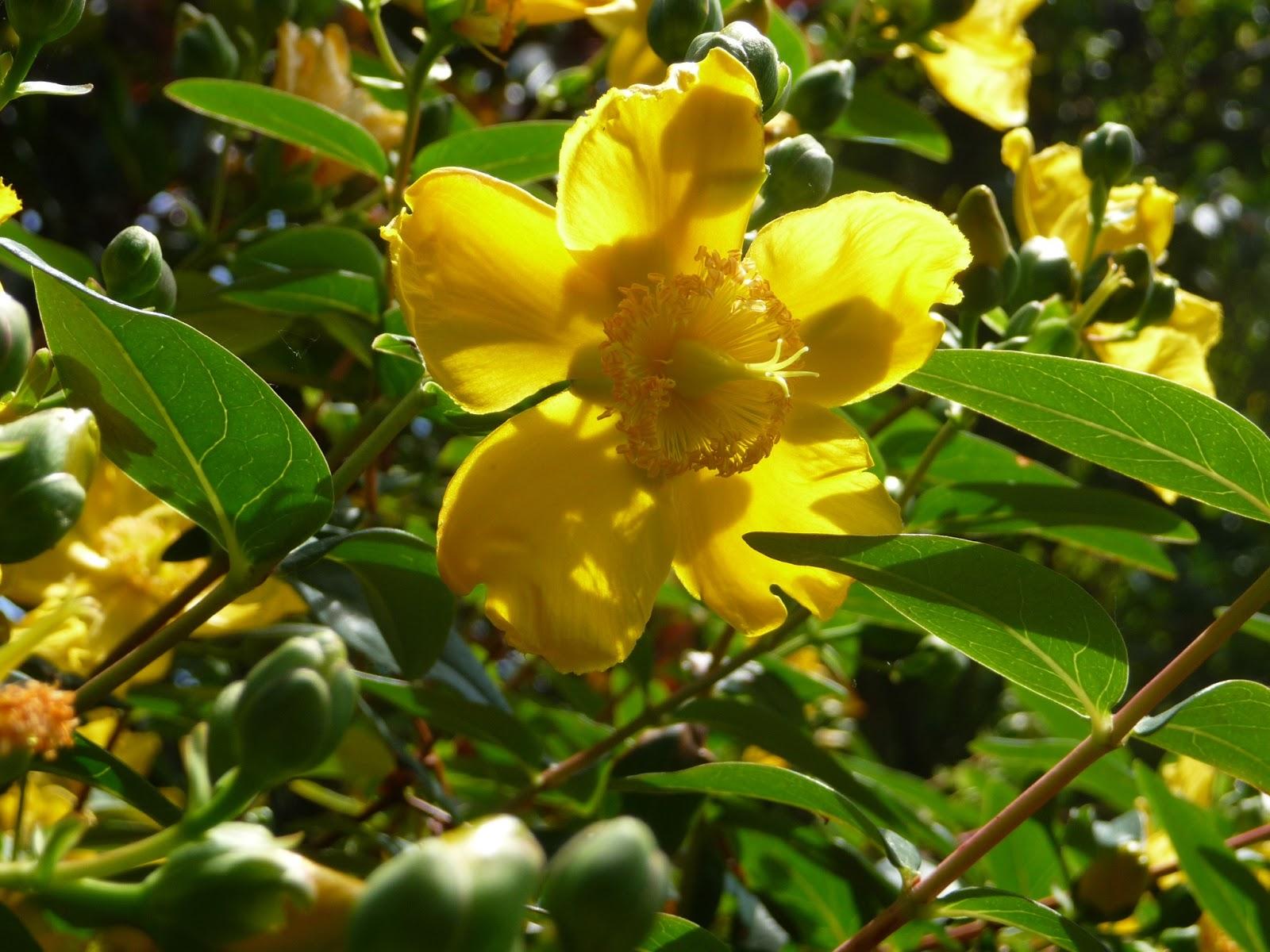 Ma terre de bruy re des fleurs arrivent d 39 autres s 39 en - Fleurs qui poussent a l ombre ...