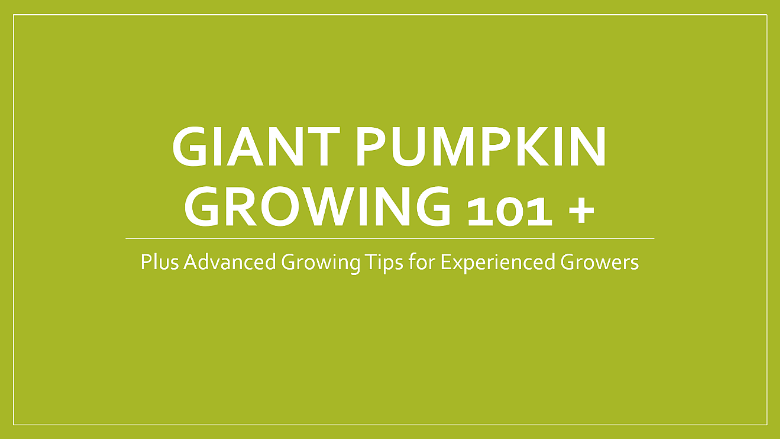 How to Grown Giant Pumpkins Video
