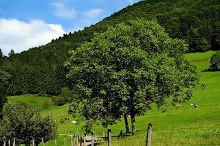 Rural Sistema de Pousio no Cadastro Ambiental