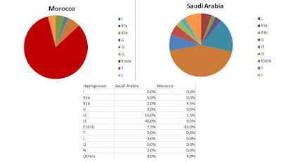 التنوع وتوزع السلالات الجينية الأبوية عند المغاربة ينفي أصولهم العربية