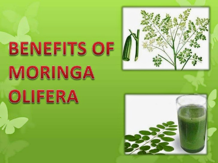 phytochemical studies of moringa oleifera Comparative phytochemical analysis of moringa oleifera and phytochemicals, moringa peregrina this study shows that moringa.