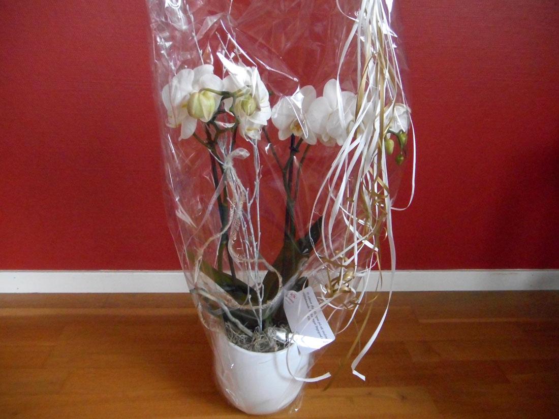 Orchidea dal progetto