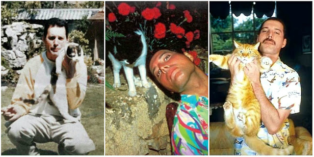251fc61b3a167 An Extraordinary Friendship  18 Fascinating Photographs of Freddie Mercury  Posing With His Beloved Cats ~ vintage everyday
