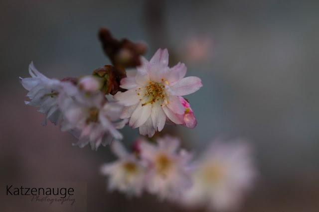http://www.daskatzenauge.blogspot.de/