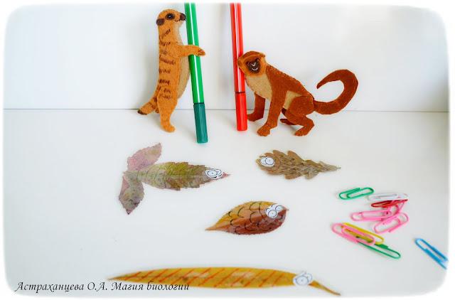 магия-биологии-осенние-игры-листья-поделки-рыбки-мартышка-сурикат-пальчиковая-игрушка