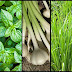 Go For Herbs That Help Fight Diseases