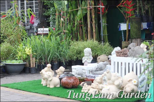 cây cảnh Thái Lan, sưu tầm cây cảnh, sưu tầm hoa cảnh, hoa chậu, hoa lan, Tử linh lan, Xương rồng, sen đá, cây không khí, cẩm cù, hoa cẩm cù