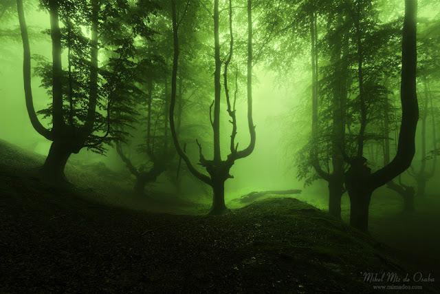 Bosque tenebroso en Gorbea