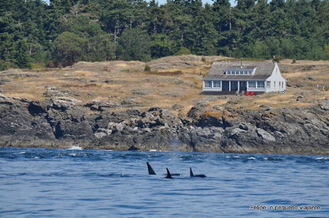 orca_spirit_adventures_orcas_victoria_canada
