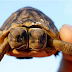 This two headed South African Tortoise trending on Google+
