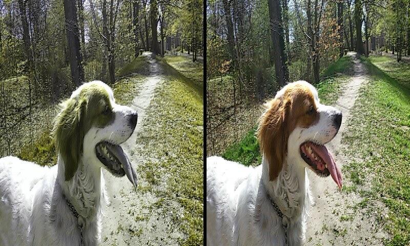 Hunde Farben