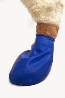 zapato perro