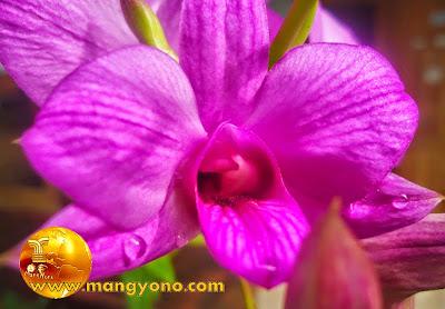 FOTO : Menanam Anggrek dengan media pohon mati. Foto dokumen www.mangyono.com