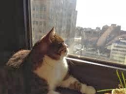 gatos observando a rua
